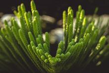 Green Macro Branch
