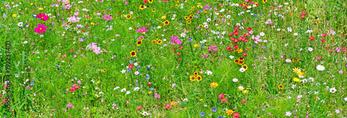 Wide background of variety of wildflowers. - 192237403