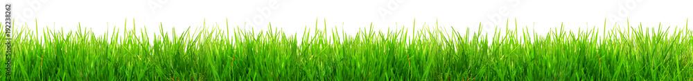 Fototapeta Gras im Frühling