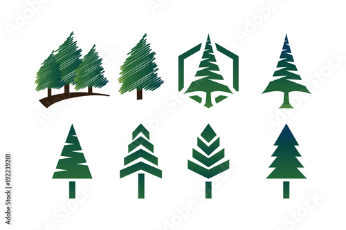 Fotografija  Collection of green pine tree template vector
