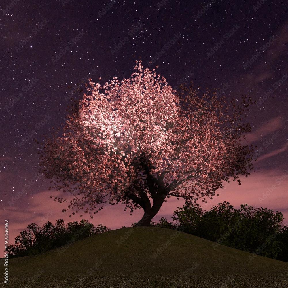 Fototapety, obrazy: 夜桜 ライトアップ