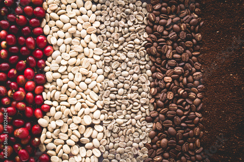 Photo Arabica coffee Steps Coffee Beans Coffee in Asia