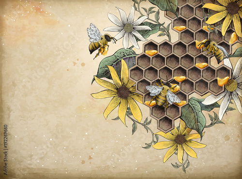 Honey bee and apiary
