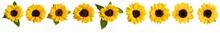Set Of Photos Of Shiny Yellow Sunflowers, Isolated On White