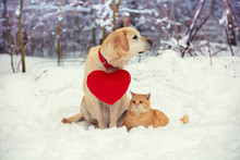 Labrador Retriever Dog With A Toy Heart On A Collar And A Red Cat Sit Side By Side In The Snow