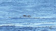 A Seagull Steals Crab Scraps F...