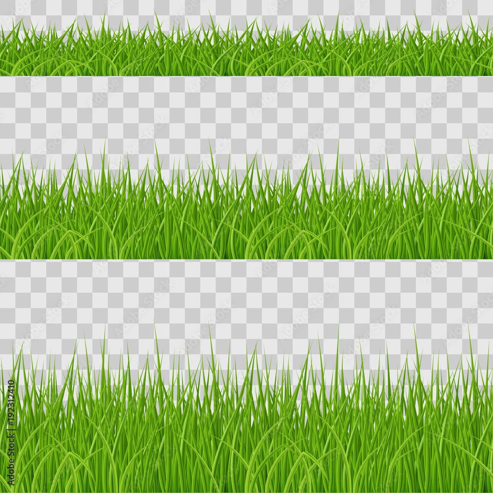 Fototapety, obrazy: Green Grass