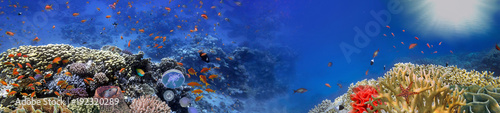 La pose en embrasure Recifs coralliens Underwater panorama and coral reef and fishes