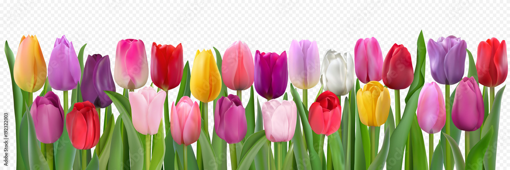 Fototapety, obrazy: Colorful tulips pattern