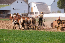 Amish Man Working Field