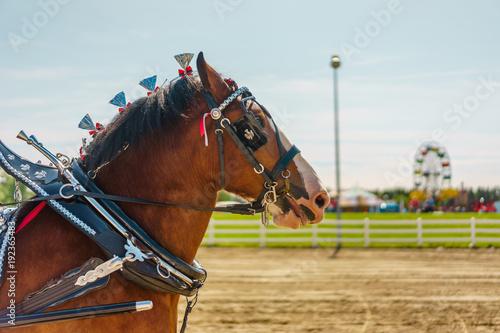 Valokuvatapetti Horse at Fair