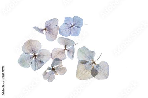 Fond de hotte en verre imprimé Hortensia floral composition