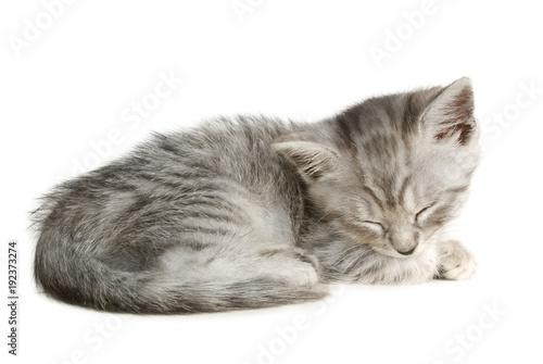 Schlafendes Kätzchen isoliert auf weißem Grund Fototapeta