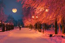 Evening Park After Snowfall