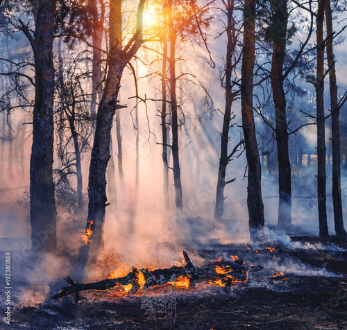 Fotomural Forest fire
