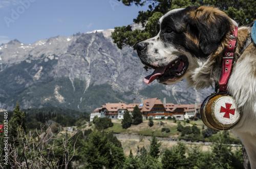 Photo san bernardo en la montaña