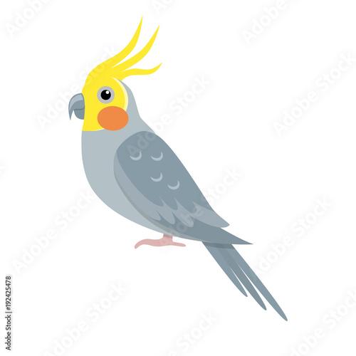 Valokuva  Corella parrot icon in flat style