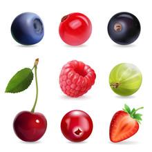 Sweet Berries, Vector Illustra...