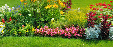 Summer Flowerbed And Green Law...
