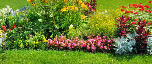 Fotografie, Obraz Summer flowerbed and green lawn. Wide photo.