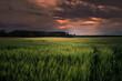 Green field a summer evening