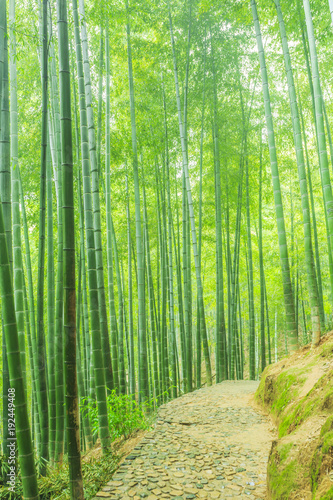 In de dag Bamboo Bamboo and bamboo forest