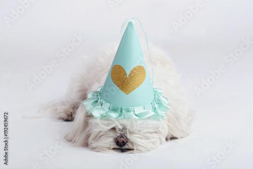 Photo perro gracioso con gorro