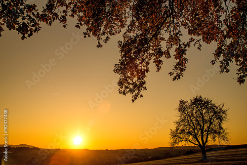 Poster Taupe sunset in autumn with tree