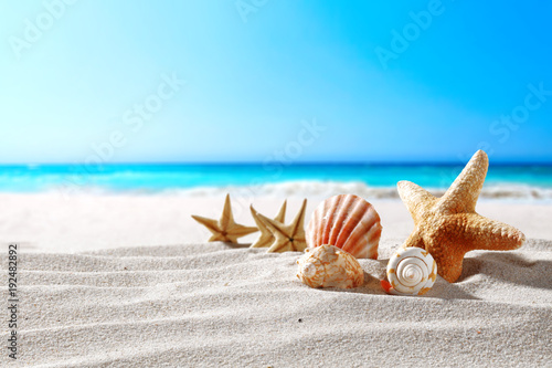 Fotomural beautiful sea shells on the seashore with room for a product or advertising text