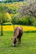 Pferd im Frühling auf der Weide