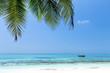 Coconut palm trees on seaside
