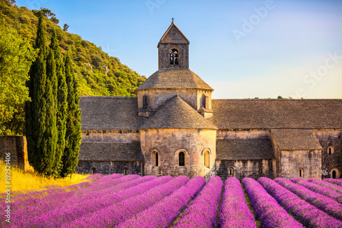 Fototapety, obrazy: Abbey of Senanque blooming lavender flowers on sunset. Gordes, Luberon, Provence, France.