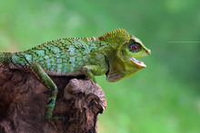 Close Up Of Chameleon Sitting On Branch Of Tree