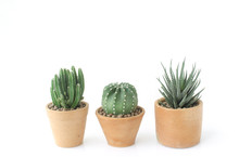 Cactus And Succulent Clay Pots...