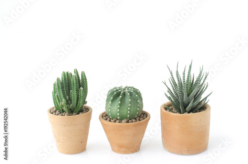 Deurstickers Cactus Cactus and Succulent clay pots house plants