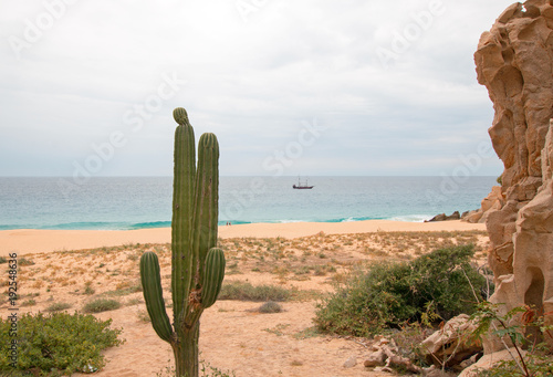 Cactus on Divorce Beach at Lands End in Cabo San Lucas in Baja California Mexico Wallpaper Mural