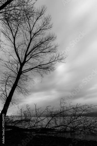 Spoed Foto op Canvas Grijze traf. Skeletal and fallen trees on a lake shore, beneath a moody sky