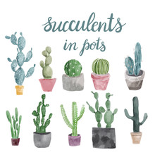 Set Of Cactus And Succulents I...