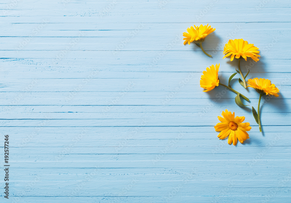 Fototapety, obrazy: calendula flowers on blue wooden background