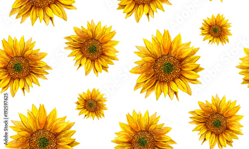 Watercolor Sunflower Rustic Pattern Country Yellow Flowers Background