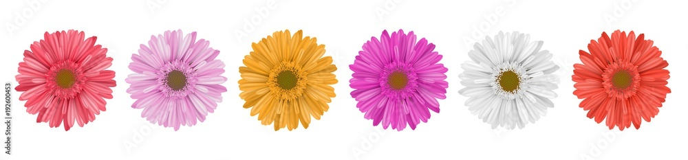 Fototapety, obrazy: Separate gerbera daisy flower row, for horizontal banner, in different colors. Vector illustration isolated on white