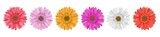 Separate gerbera daisy flower row, for horizontal banner, in different colors. Vector illustration isolated on white