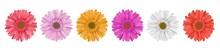 Separate Gerbera Daisy Flower ...