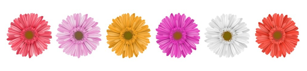Separate gerbera daisy flow...
