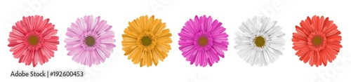 Photographie Separate gerbera daisy flower row, for horizontal banner, in different colors