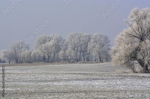 hoarfrost © ezp