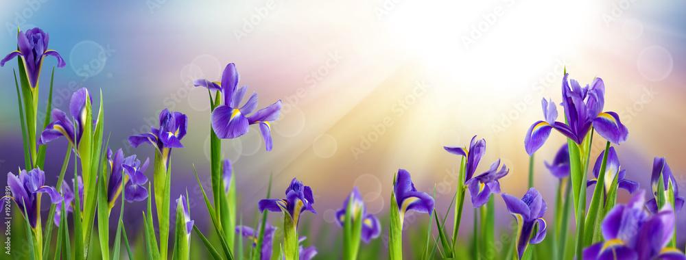 Fototapeta image of garden with flowers