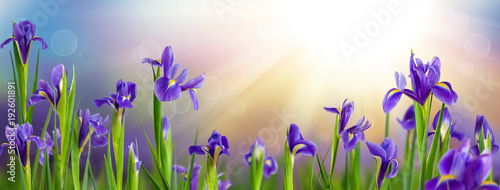 Foto op Plexiglas Iris image of garden with flowers
