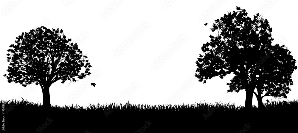 Fototapeta Silhouette Park or Field and Trees