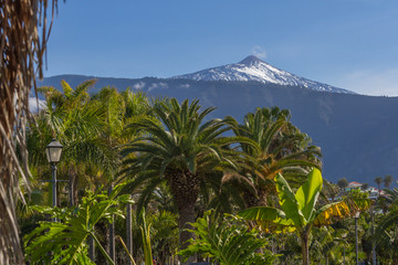 Fototapeta na wymiar Horizontal landscape image of a snow capped mountain with a palm tree in the foreground. Date palm, Spain
